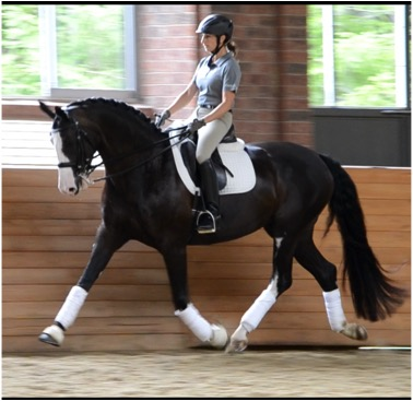 Rockwood On Dressage Barn Opening Oct 1st Private